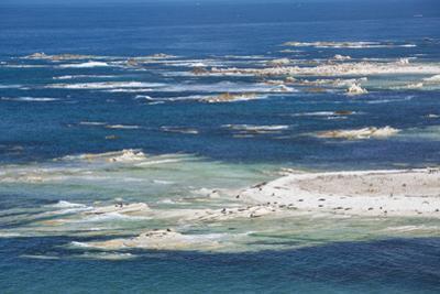 Colony of New Zealand fur seals (Arctocephalus forsteri) off Point Kean, Kaikoura Peninsula, Kaikou