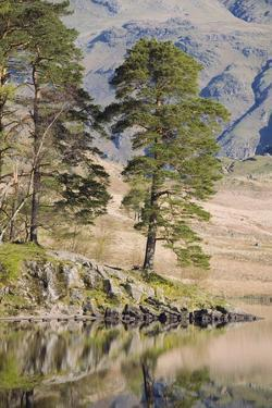 Early Morning Reflections, Blea Tarn, Above Little Langdale by Ruth Tomlinson