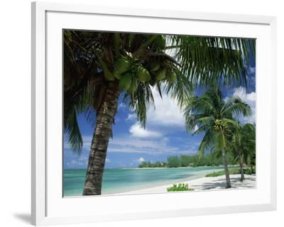 Palms on Shore, Cayman Kai Near Rum Point, Grand Cayman, Cayman Islands, West Indies