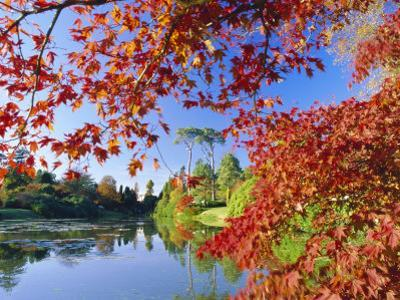 Sheffield Park Garden, the Middle Lake Framed by Scarlet Acer Leaves, Autumn, East Sussex, England by Ruth Tomlinson