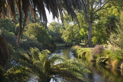 View along the palm-fringed Avon River in Christchurch Botanic Gardens, Christchurch, Canterbury, S