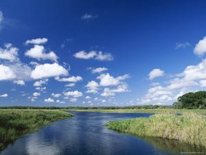 View from Riverbank of White Clouds and Blue Sky, Myakka River State Park, Near Sarasota, USA by Ruth Tomlinson