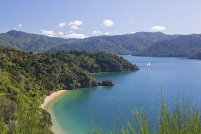 View over Governors Bay and Grove Arm, Queen Charlotte Sound (Marlborough Sounds), near Picton, Mar