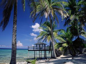 Waterside Restaurant Beneath Palms, Old Man Bay, Grand Cayman, Cayman Islands, West Indies by Ruth Tomlinson