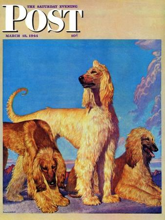 """Afghan Hounds,"" Saturday Evening Post Cover, March 18, 1944 by Rutherford Boyd"
