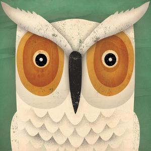 White Owl by Ryan Fowler