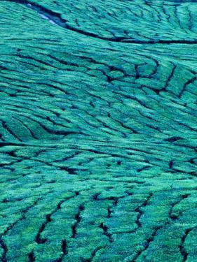Aerial View of Boh Tea Plantation, Cameron Highlands, Malaysia by Ryan Fox