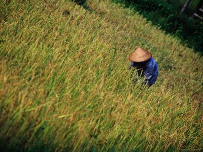 Worker in Field Around Vang Vieng, Vang Vieng, Laos