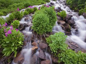 A Mountain Stream Within the Indian Peaks Wilderness Area Near Rocky Mountain National Park, Co by Ryan Wright