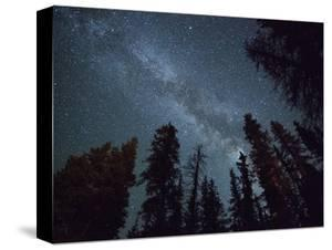 The Milky Way Shines Above the Forest in the San Juan Mountains of Southern Colorado. by Ryan Wright