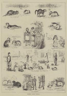 Amateur Rabbit Farming by S.t. Dadd