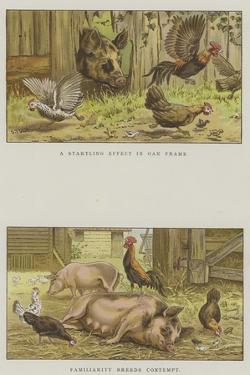 Farmyard Scenes by S.t. Dadd