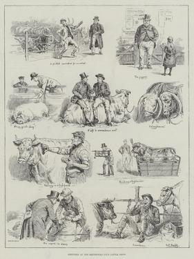 Sketches at the Smithfield Club Cattle Show by S.t. Dadd