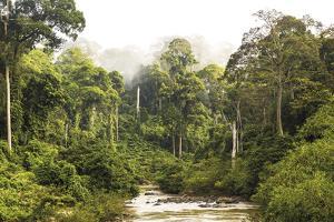Sabah Mist