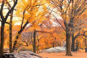 Foggy October Afternoon in Central Park, Manhattan, New York Cit by Sabine Jacobs
