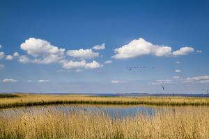 Salt Marsh, Amrum Island, Northern Frisia, Schleswig-Holstein, Germany by Sabine Lubenow