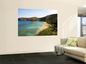 Coral Reef and Beach at Hanauma Bay by Sabrina Dalbesio