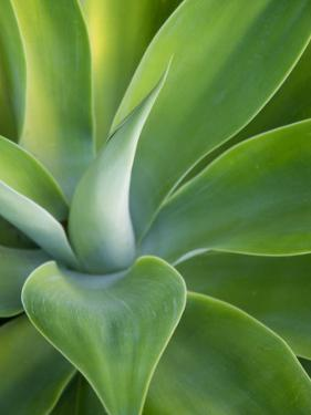 Green Succulent Plant at Botanical Gardens by Sabrina Dalbesio
