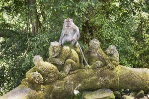 Sacred Monkey Forest, Ubud, Bali, Indonesia, Southeast Asia, Asia by G &