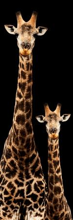 https://imgc.allpostersimages.com/img/posters/safari-profile-collection-giraffe-and-baby-black-edition-iii_u-L-Q120PQP0.jpg?p=0