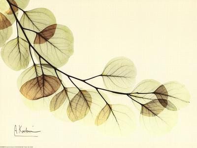 https://imgc.allpostersimages.com/img/posters/sage-eucalyptus-leaves-ii_u-L-F3POU10.jpg?artPerspective=n