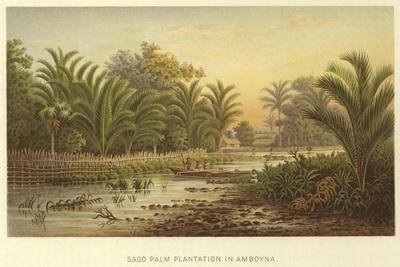 https://imgc.allpostersimages.com/img/posters/sago-palm-plantation-in-amboyna_u-L-PPF8GR0.jpg?artPerspective=n