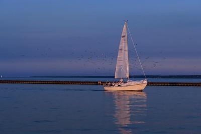 https://imgc.allpostersimages.com/img/posters/sailboat-and-seagulls-at-dusk_u-L-Q1CQJ2Z0.jpg?artPerspective=n
