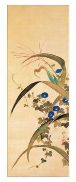 July by Sakai Hoitsu