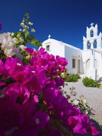 Greek Church and Flowers, Santorini, Cyclades, Greek Islands, Greece, Europe