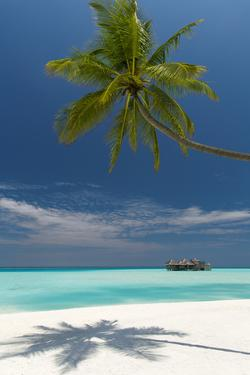 Luxury Over-Water Bungalow at Gili Lankanfushi Resort Maldives and Beach with Palm Trees by Sakis Papadopoulos