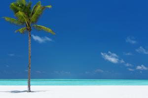 Palm tree and tropical beach, The Maldives, Indian Ocean, Asia by Sakis Papadopoulos