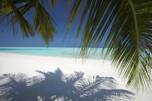 Tropical Beach, Maldives, Indian Ocean, Asia by Sakis Papadopoulos