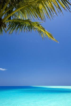 Shades of Blue and Palm Tree, Tropical Beach, Maldives, Indian Ocean, Asia