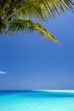 Shades of Blue and Palm Tree, Tropical Beach, Maldives, Indian Ocean, Asia by Sakis