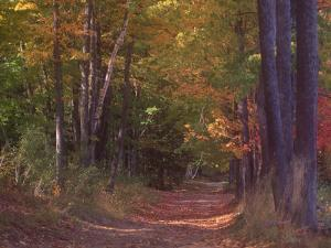 Autumn Trees in Vermont by Sally Brown