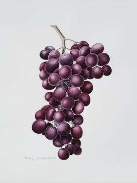 Black Grapes by Sally Crosthwaite