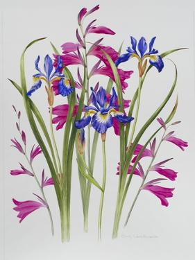 Gladiolus and Iris Sibirica by Sally Crosthwaite