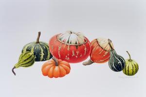 Gourds by Sally Crosthwaite