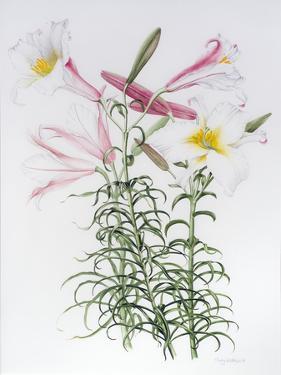 Lilium regale large group by Sally Crosthwaite