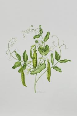 Peas by Sally Crosthwaite