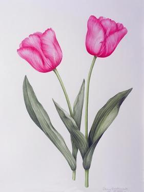 Pink impression by Sally Crosthwaite