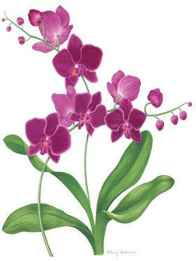Pink Orchid by Sally Crosthwaite