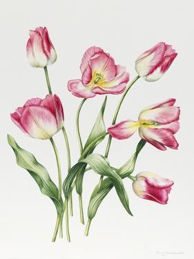 Pink Tulips by Sally Crosthwaite