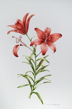 Red Lily II by Sally Crosthwaite