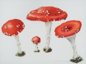 Red Toadstools Fly Agaric by Sally Crosthwaite