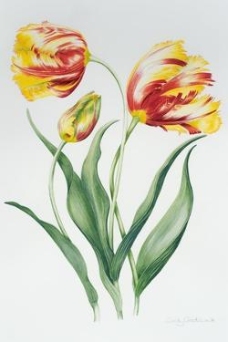 Red Yellow Parrot Tulip Group by Sally Crosthwaite