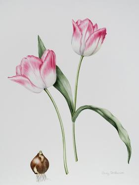 Tulip Meissner Porcellan with Bulb by Sally Crosthwaite