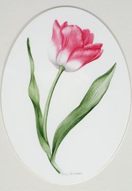 Tulip Meissner Porzellan Singe by Sally Crosthwaite