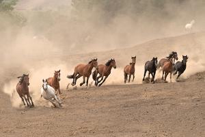 Running Wild by Sally Linden