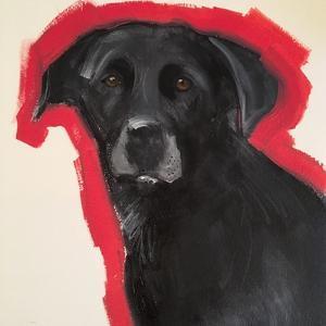 Labrador by Sally Muir
